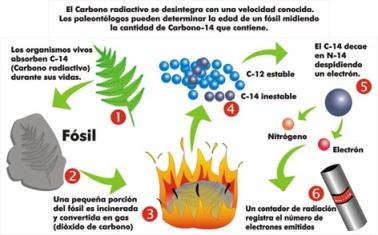 Prueba del Carbono 14