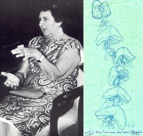 figura-2-alvarino-y-dibujo