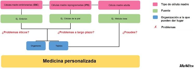 Infografía del origen y destino de las células madre.